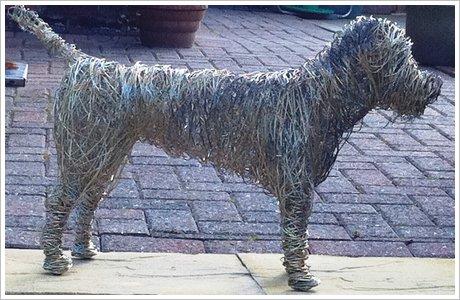 borderterrierdog.jpg